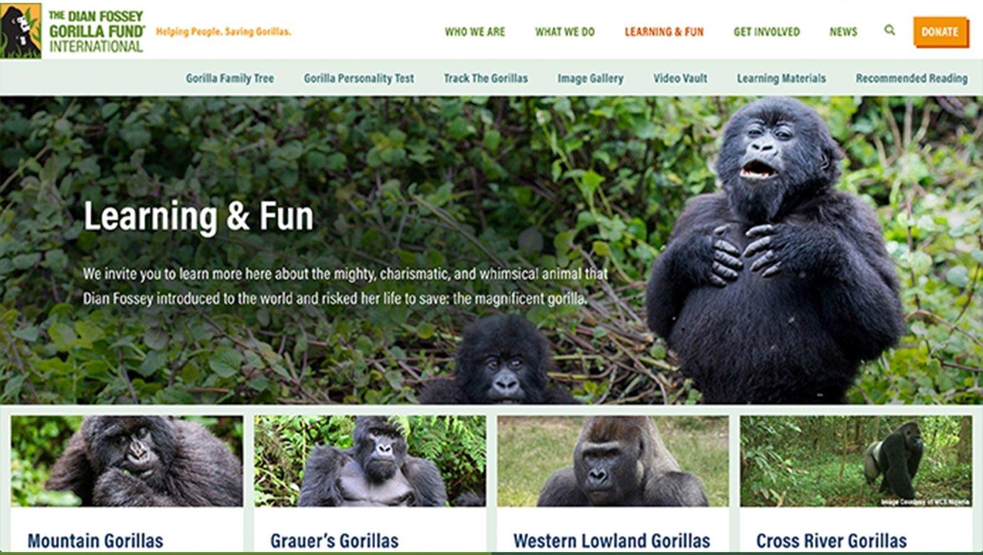 Dian Fossey Company | The Creative Momentum - Web Design & Digital Marketing